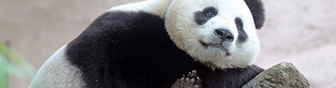 Hikvision дари камери на зоопарка в Москва